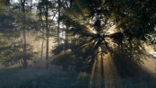 sijoittaminen metsään